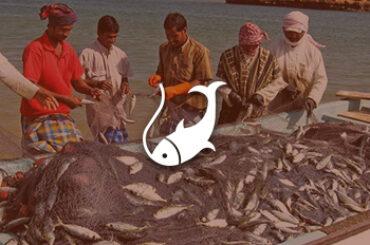 credit-oman-fisheries